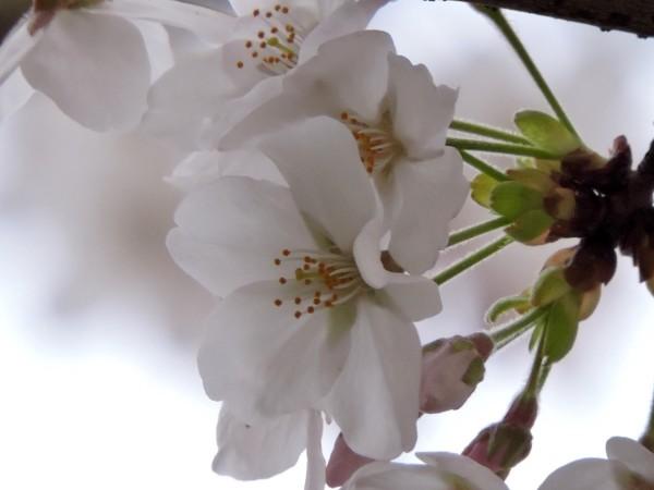 20160327 084 花クリア アップ 小